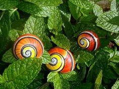 Polymita Picta, Only found in Cuba Cuba, Reptiles, Snail Art, Snail Shell, Sea Slug, Like Animals, Unique Animals, Weird And Wonderful, Beautiful Horses