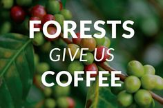 A surprising number of the foods and spices we eat every day come from forests. The next time you're enjoying a cup of coffee or a scoop of vanilla ice cream, thank a forest!