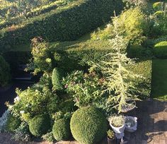 View of the hedges and the boxwoods from the first floor of the house 🌳🌳🌳they give the structure for the flowers 🌸  #mygarden #jardin #garten #trädgård #hage #hedges #boxwood #haven #tuin #garden