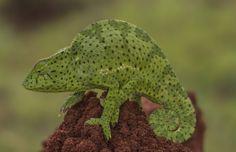 Kameleon by Rita Caluori on 500px