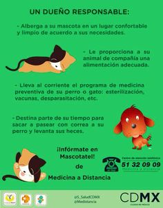 Conoce #mascotatel 51320909 #dueñoresponsable