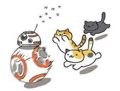 BB8 as a cat toy