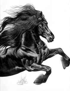 Friesian Drawing by Cheryl Polland - pen and ink