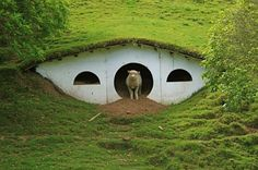 When Peter Jackson's production crew left Matamata, New Zealand, they left 17 hobbit holes on the private farm that was used as a stand-in for the Shire. Since then, the farm's sheep have moved in on this hobbit ghost town. Sheep Shelter, Animal Shelter, Sheep House, Earth Sheltered Homes, Underground Homes, Underground Living, Sheep Farm, Earth Homes, Dog Houses