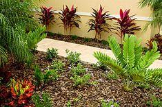 Florida Friendly Landscaping, Florida Plants, Florida Gardening, Lawn Care