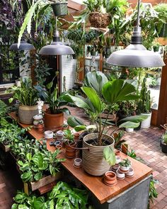 Our ever evolving Solarium. So dear to our hearts. Our ever evolving Solarium. So dear to our hearts Garden Spaces, Garden Plants, Indoor Plants, Hanging Plants, Jardin Luxuriant, Room With Plants, Big House Plants, Plant Aesthetic, Garden Shop