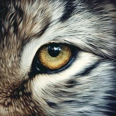 animal eye art - Google Search