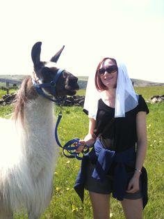 Go llama trekking with Saddleworth Llamas on your hen weekend?