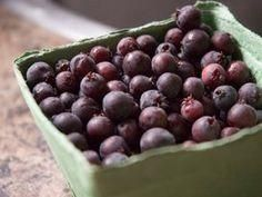 Saskatoon Berry and Apple Salsa Dressing Recipe, Salad Dressing, Saskatoon Berry Recipe, Apple Salsa, Food For Thought, Blueberry, Berries, Good Food, Healthy Eating