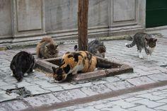 Streetcats in Galata, Istanbul