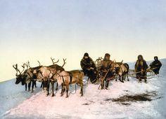 reindeer - Google Search