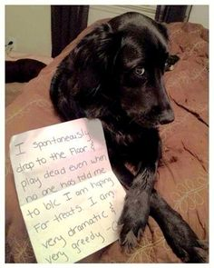 8.21.14 - Best Dog Shaming Photos11