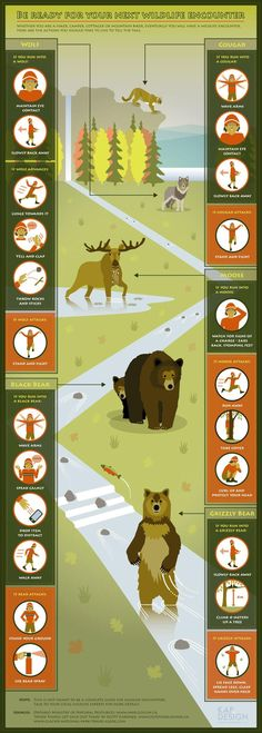 TIP: How to deal with certain wildlife you might see on the trail.