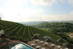 View over the rolling hills of Piedmont, Italy. Pool, sunshine and good wine. Bellisima.