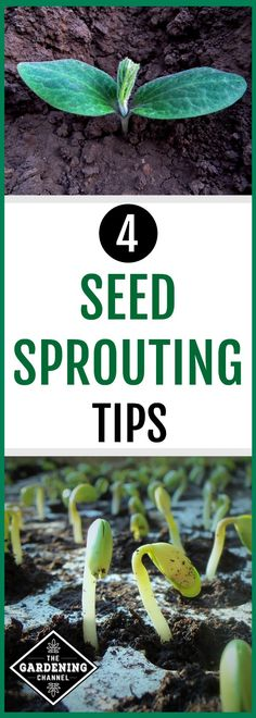Are you ready to start seeds for your garden? Don't miss these seed sprouting tips, including tips to harden seedlings.