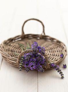 lavanda | Flickr - Photo Sharing!