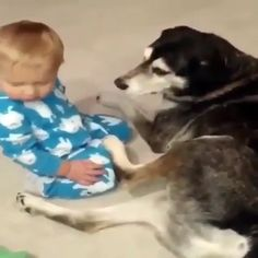 Cute Funny Baby Videos, Cute Funny Babies, Adorable Dogs, Cute Animal Videos, Cute Animal Pictures, Funny Animal Videos, Cute Funny Animals, Cute Baby Animals, Dogs And Kids