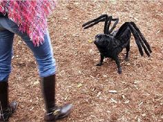 If your pampered pooch is truly one of the family, making a spider dog costume is an excellent way to include him in the Halloween festivities. Spider dog costumes also make a fun way to prank your . Pug Halloween, Humour Halloween, Chien Halloween, Pet Halloween Costumes, Halloween Spider, Homemade Halloween, Halloween Pranks, Happy Halloween, Pugs In Costume