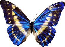 Mariposa Azul - Descarga De Over 61 Millones de fotos de alta calidad e imágenes Vectores% ee%. Inscríbete GRATIS hoy. Imagen: 21763131