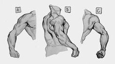 Drawing The Human Figure - Tips For Beginners - Drawing On Demand Arm Anatomy, Human Anatomy Art, Anatomy Poses, Anatomy For Artists, Human Figure Drawing, Body Drawing, Life Drawing, Drawing Reference Poses, Anatomy Reference
