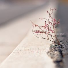 A perfect, if fragile, flower. Photograph by Anika Alonzo.