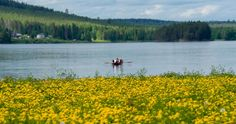 Fishing for salmon on the Tornionjoki River in Finland - Travel Pello - Lapland, Finland Sweden Tourism, Types Of Lines, Finland Travel, Lapland Finland, Moving Water, Recreational Activities, Salmon Fishing, Rest And Relaxation, Travel Images