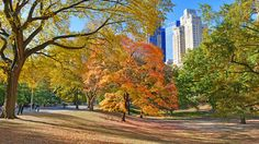 25 reasons you know it's fall in NYC