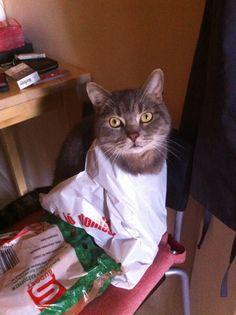 Marci the Cat!