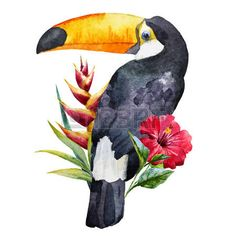 Beautiful image with nice watercolor toucan with flowers Illustration , Watercolor Bird, Watercolor Animals, Watercolor Illustration, Watercolor Paintings, Bird Drawings, Animal Drawings, Tropical Art, Tropical Flowers, Bird Art