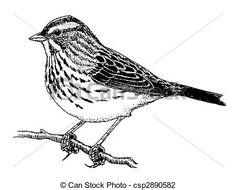 Resultado de imagen para sparrow drawing