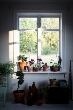 Indoor Plant Inspiration |Made by Mary, Hållbart, Hållbara presenter, Kompisplantor, Sticklingar, Made by…