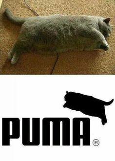 Puma?