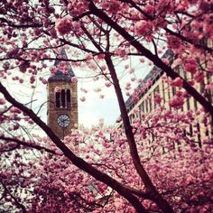 Cornell University, my favorite Cornell University, Space Place, Big Ben, College, Spaces, Travel, University, Viajes, Traveling