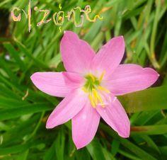 Cyzone tan natural como una flor .. #PrimerasVecesByCyzone