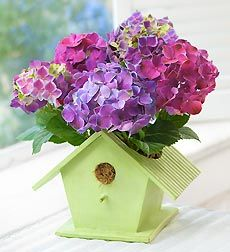Bird House of Blooms  For any occasion, a bird house in the hands is worth almost as much as their happiness. We've paired a green wooden bird house--a traditional harbinger of Spring--with a gorgeous blooming hydrangea plant, symbolic of love, understanding and gratitude. They'll be chirping about it for weeks to come