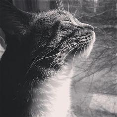 `Charlie cat in the sun photography    yolandastape's image