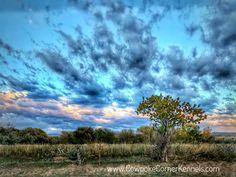 98 Best Wyoming Images Wyoming The Barnyard Cody Wyoming