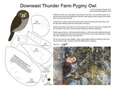 pygmy owl -wow Susan has a load of wonderful patterns for birds on her site - do go & look - now