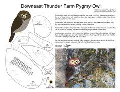 pygmyowl