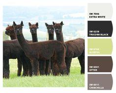 Female alpacas for sale - Inca Alpaca Alpacas For Sale, Colour Board, World Of Color, Baby Alpaca, Farm Animals, Animals Beautiful, Wonders Of The World, South America, Camel