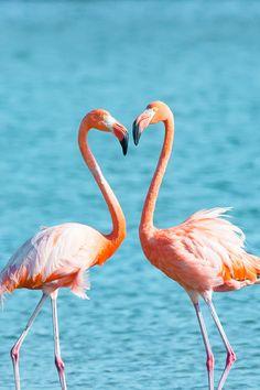 Fine Art Animal Photography Flamingo  by EllieTeramotoPhoto