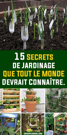 Horticulture, Diy Garden, Garden Design, Permaculture, Plants, Small Gardens, Garden Decor, Herb Garden Design, Garden Landscaping