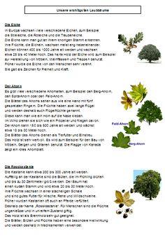 Unsere wichtigsten Laubbäume