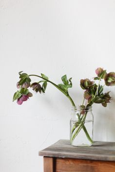 Jessica Comingore - Flora & Fauna