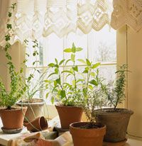 Start a windowsill herb garden -- you can even do your cultivating in daring evening wear or comfy pajamas if you like.