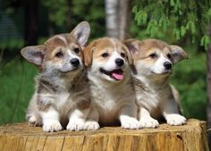 A trifecta of cuteness