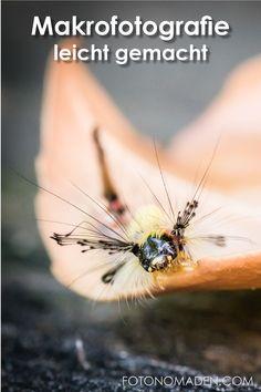 Tipps für Makrofotografie in der Natur von Pflanzen, Insekten und Blumen. Von der Technik bis zum passenden Objektiv erklären wir die Kamera-Einstellungen und was du für die Makrofotografie als Anfänger brauchst.