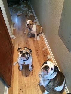 Cutest little guilty faces ever! Awwwww I'd get revenge with the vacuum