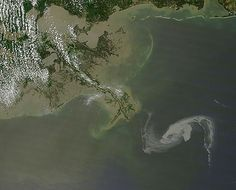Smithsonian Rolls Out New Gulf of Mexico Oil Spill Webpage Bp Oil, Bayou Country, Deepwater Horizon, United States Geological Survey, Oil Spill, Deep Water, Environmental Issues, Gulf Of Mexico, Great Lakes