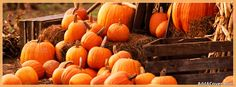 I'm so happy for Fall! Fall Cover Photos, Fall Facebook Cover Photos, Halloween Facebook Cover, Facebook Timeline Covers, Fall Photo Props, Facebook Header, Twitter Headers, Fb Banner, Cover Photo Quotes